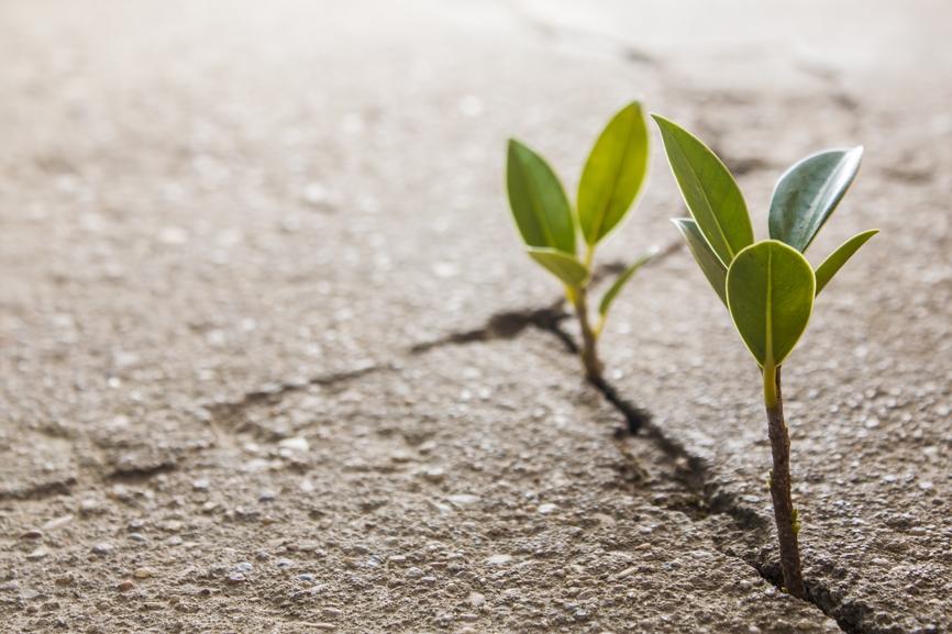 sviluppare le potenzialità